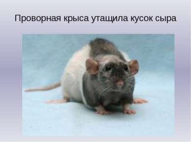 Проворная крыса утащила кусок сыра