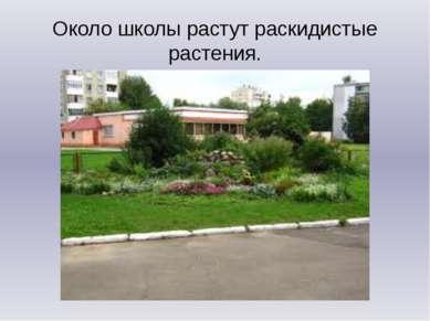 Около школы растут раскидистые растения.