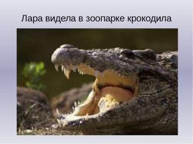 Лара видела в зоопарке крокодила