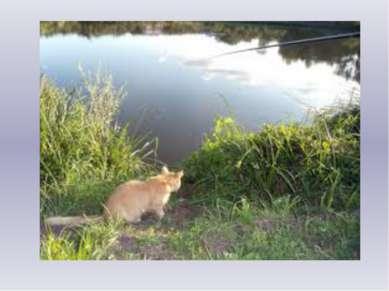 Утром ранним за мостом Ловил рыбу кот хвостом. Без улова кот остался, Хотя оч...
