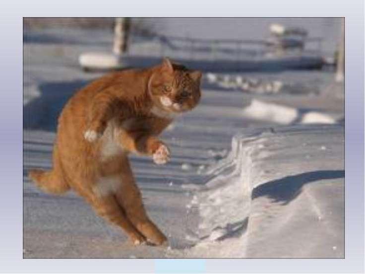 Пошел котик на Торжок, Купил котик пирожок, Пошел котик на улочку, Купил коти...