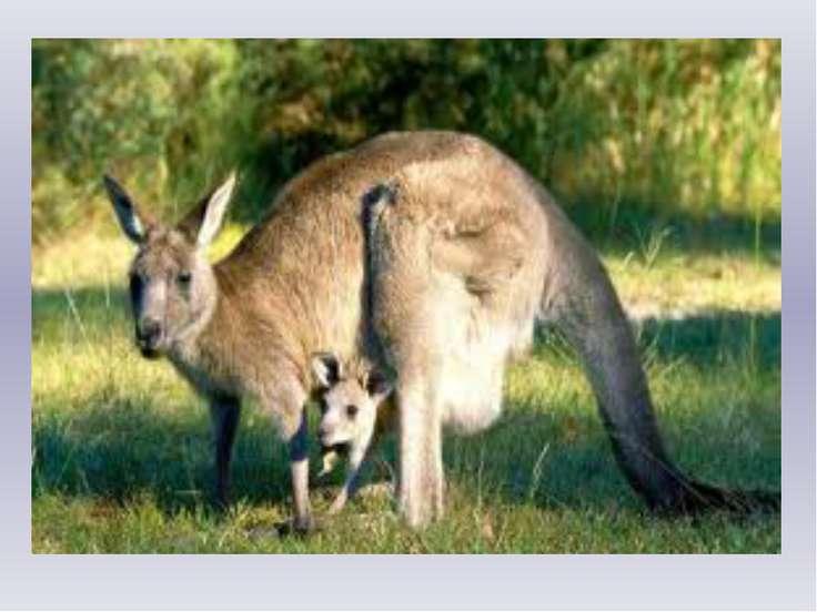 Морж Морж спросил у кенгуру: -Как выносишь ты жару? -Я от холода дрожу!- Кенг...