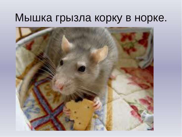 Мышка грызла корку в норке.