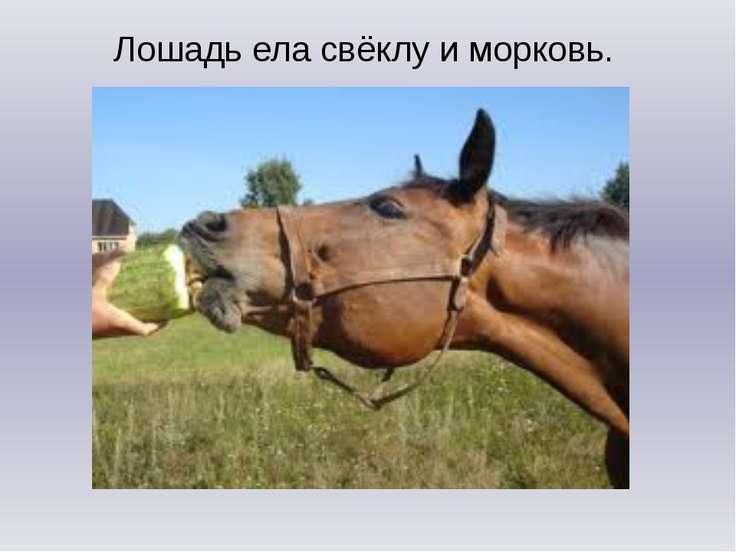 Лошадь ела свёклу и морковь.
