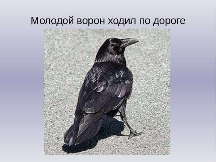 Молодой ворон ходил по дороге