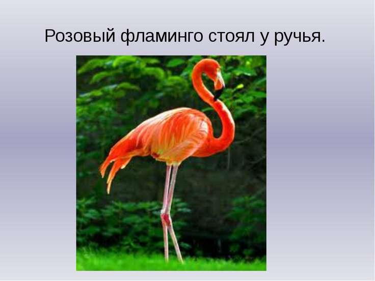 Розовый фламинго стоял у ручья.