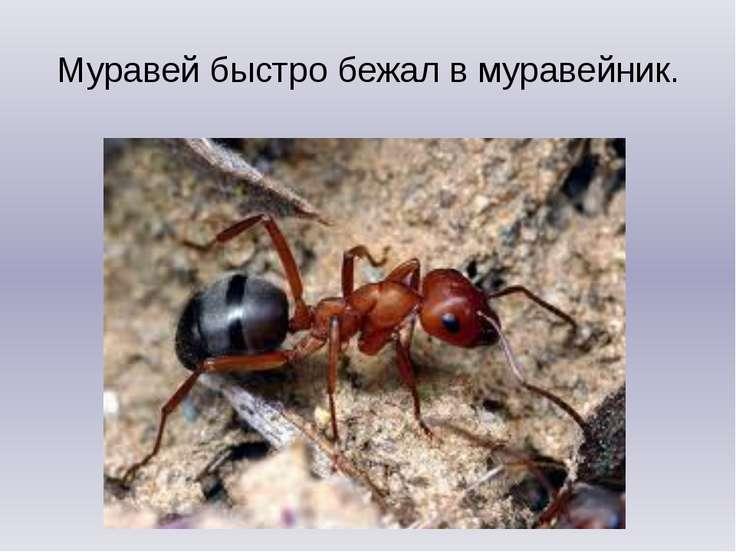 Муравей быстро бежал в муравейник.
