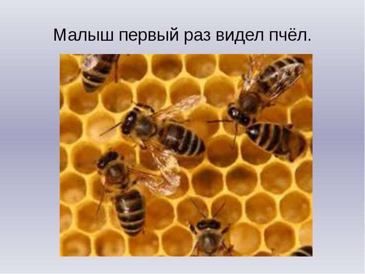 Малыш первый раз видел пчёл.