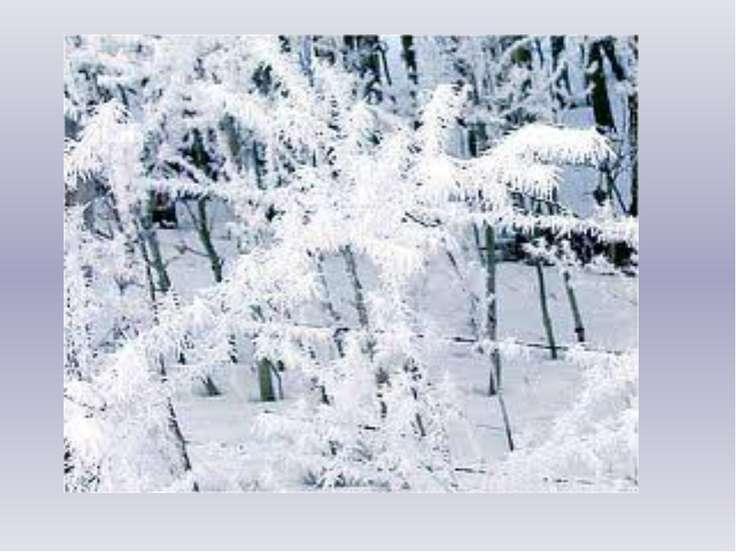 На ветру, на первом холоде, Старый дуб роняет жёлуди. А в саду за нашей школо...
