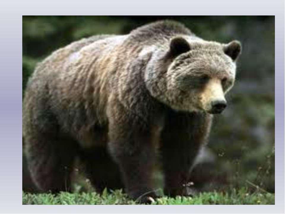 Медведь Я в бору, бору, бору Лапой мёда наберу, Наберу я мёду Полную колоду. ...