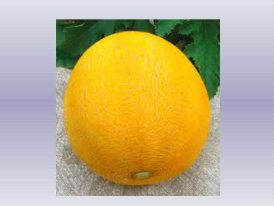 Круглая, а не месяц. Желтая, а не масло. Сладкая, а не сахар. С хвостом, а не...