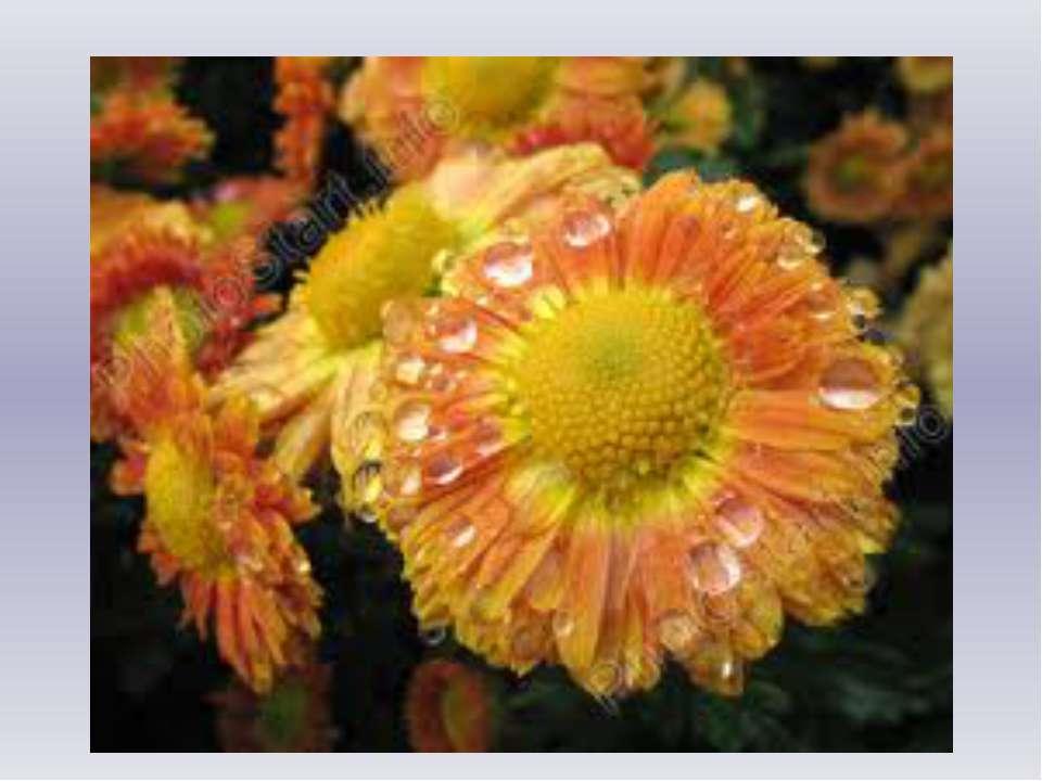 Рано утром на цветах Ты найдёшь меня в садах. Станет солнышко катиться – И ис...