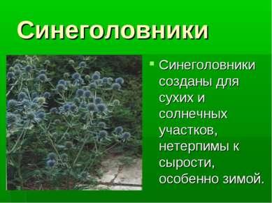 Синеголовники Синеголовники созданы для сухих и солнечных участков, нетерпимы...