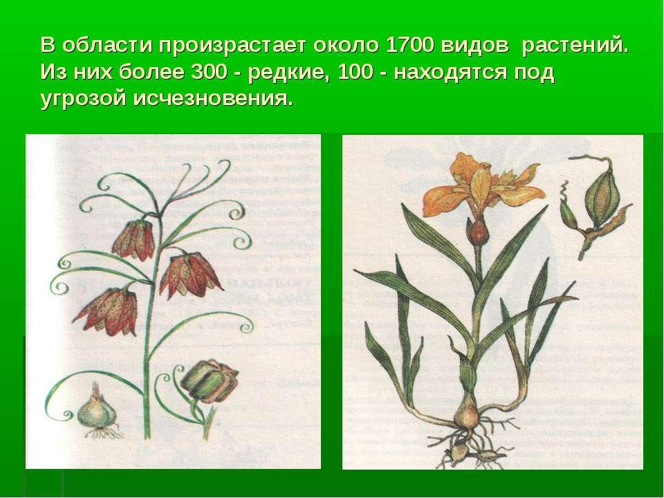 В области произрастает около 1700 видов растений. Из них более 300 - редкие, ...