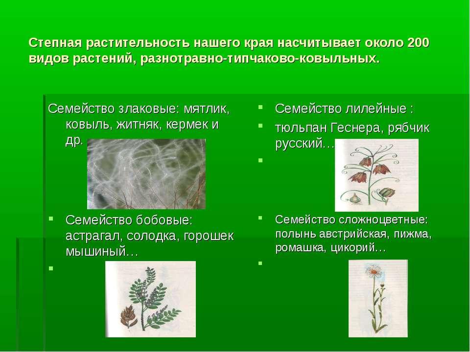 Степная растительность нашего края насчитывает около 200 видов растений, разн...