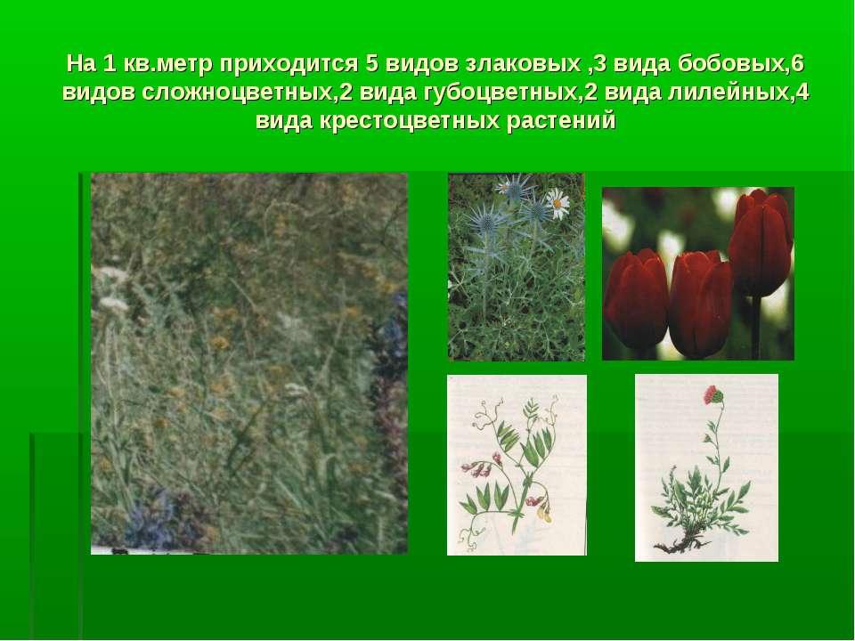 На 1 кв.метр приходится 5 видов злаковых ,3 вида бобовых,6 видов сложноцветны...