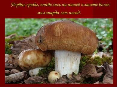 Первые грибы, появились на нашей планете более миллиарда лет назад.
