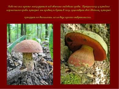 Либо же они просто маскируются под обычные съедобные грибы.Практически у каж...