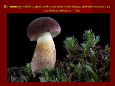 По запаху: съедобные грибы по большей своей части вкусно, ароматно пахнут, а ...