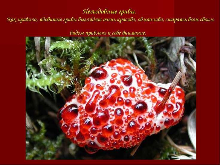 Несъедобные грибы. Как правило, ядовитые грибы выглядят очень красиво, обманч...