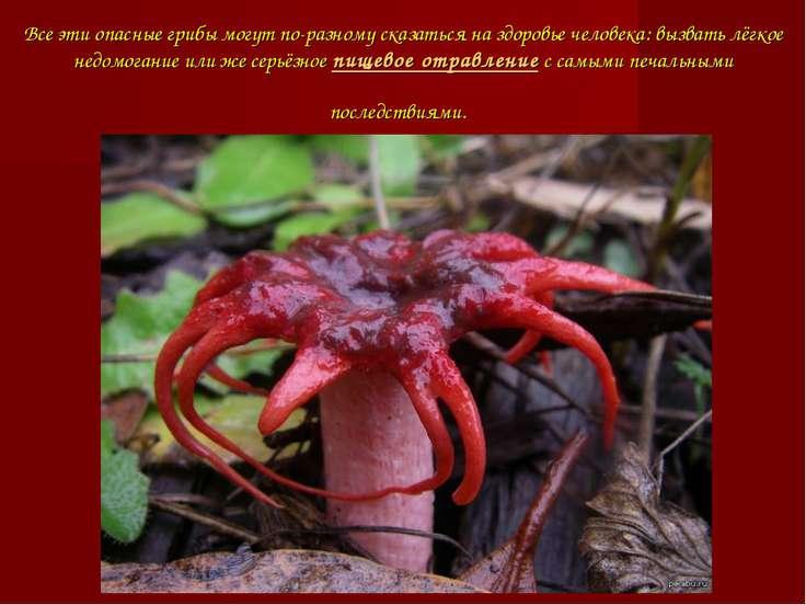 Все эти опасные грибы могут по-разному сказаться на здоровье человека: вызват...