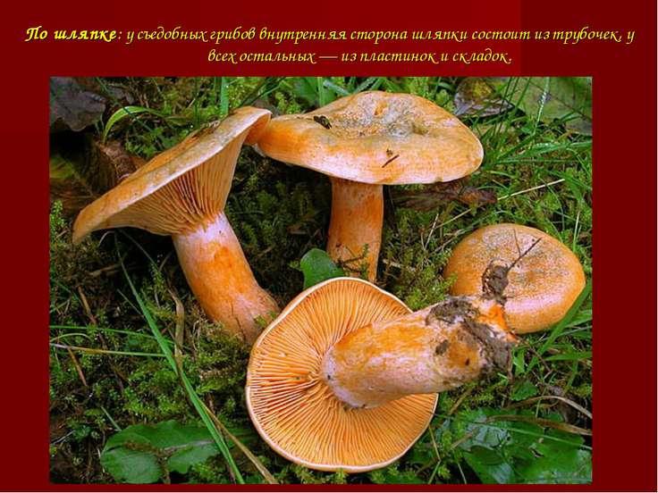 По шляпке: у съедобных грибов внутренняя сторона шляпки состоит из трубочек, ...