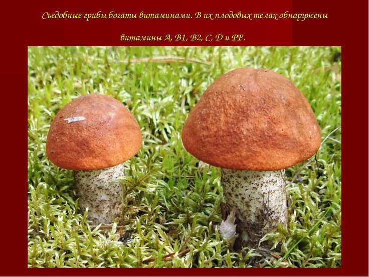 Съедобные грибы богаты витаминами. В их плодовых телах обнаружены витамины А,...