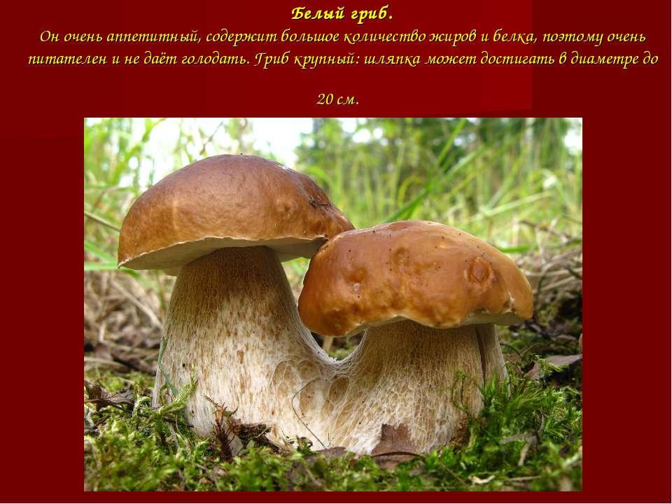 Белый гриб. Он очень аппетитный, содержит большое количество жиров и белка, п...
