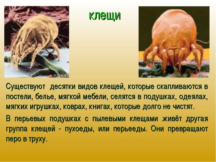 клещи Существуют десятки видов клещей, которые скапливаются в постели, белье,...