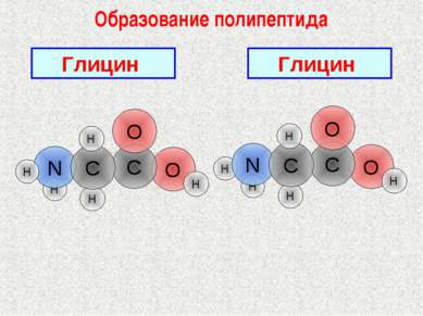 Образование полипептида Глицин H O H H Глицин