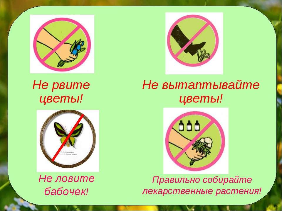 не ловите бабочек плакат