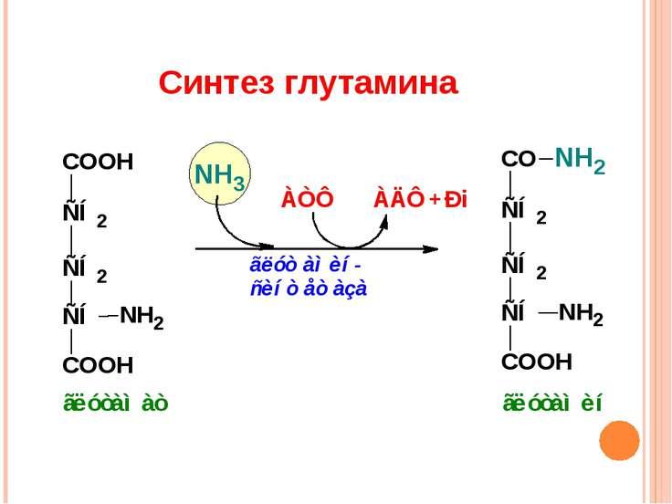 Синтез глутамина