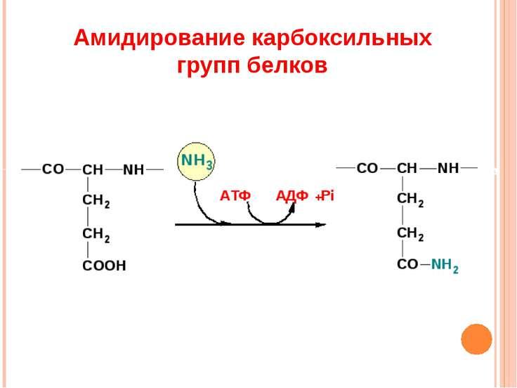 Амидирование карбоксильных групп белков