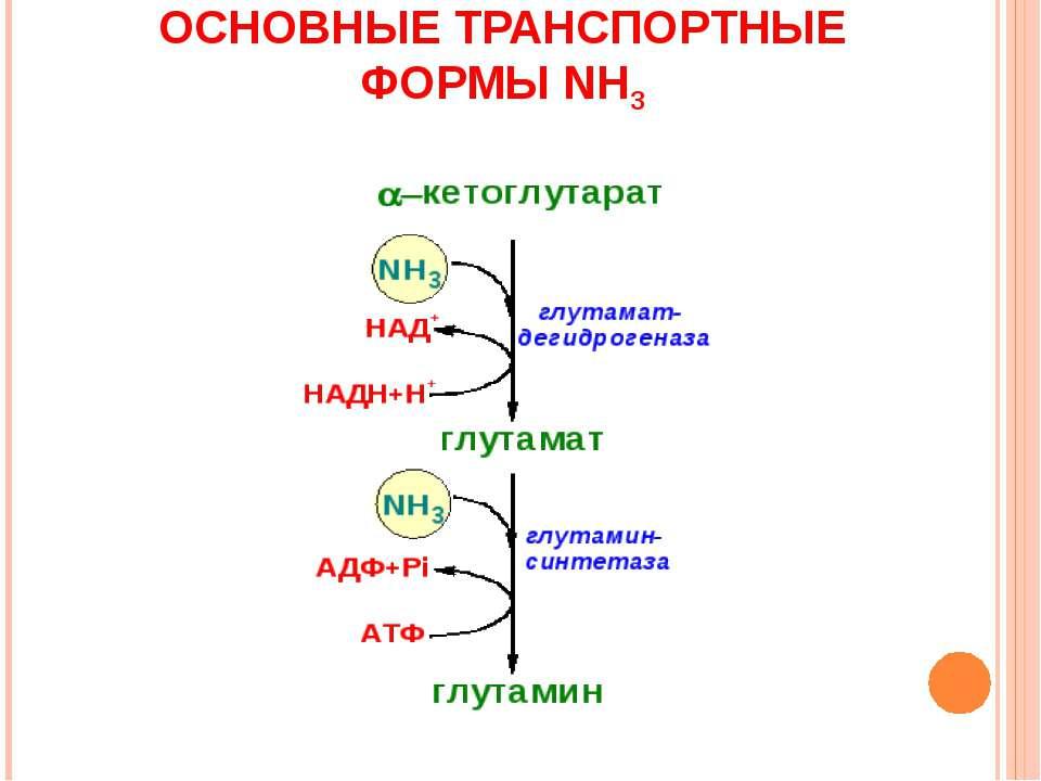 ОСНОВНЫЕ ТРАНСПОРТНЫЕ ФОРМЫ NH3