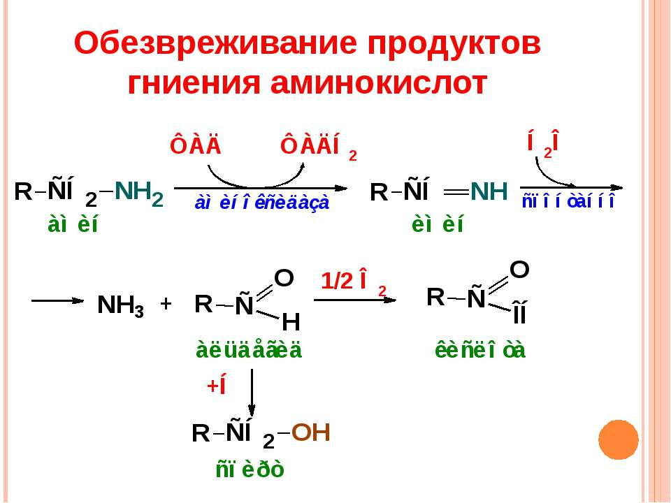 Обезвреживание продуктов гниения аминокислот