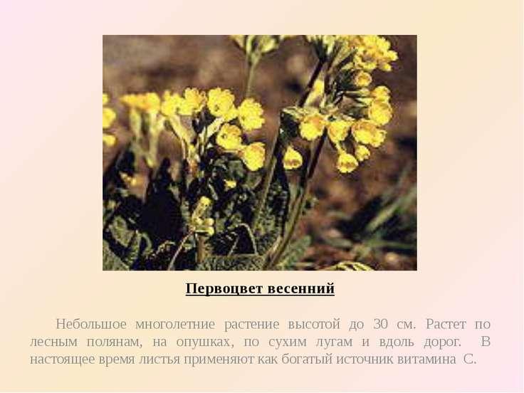 Первоцвет весенний Небольшое многолетние растение высотой до 30 см. Растет по...