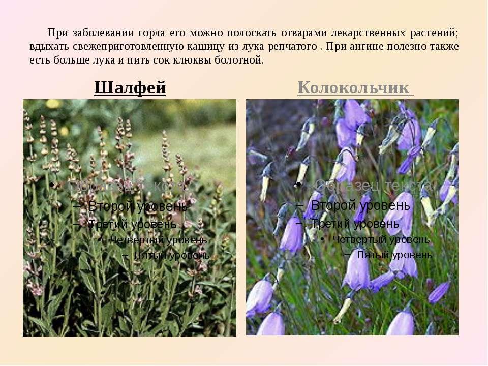 При заболевании горла его можно полоскать отварами лекарственных растений; вд...