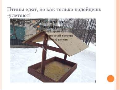 Птицы едят, но как только подойдешь -улетают!