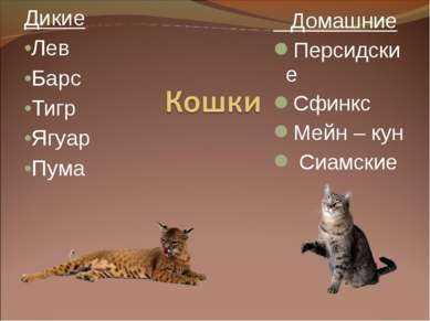 Дикие Лев Барс Тигр Ягуар Пума Домашние Персидские Сфинкс Мейн – кун Сиамские