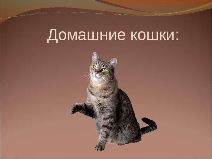 Домашние кошки: