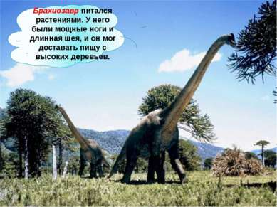 Брахиозавр питался растениями. У него были мощные ноги и длинная шея, и он мо...