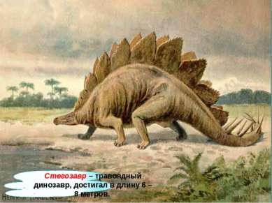 Стегозавр – травоядный динозавр, достигал в длину 6 – 8 метров.