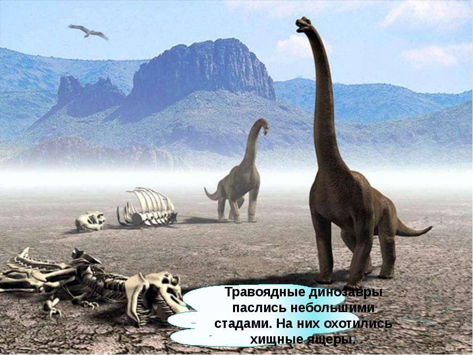 Травоядные динозавры паслись небольшими стадами. На них охотились хищные ящеры.