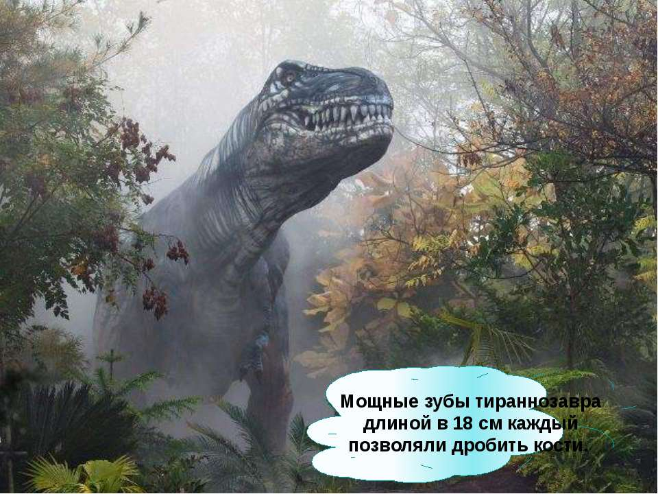 Мощные зубы тираннозавра длиной в 18см каждый позволяли дробить кости.