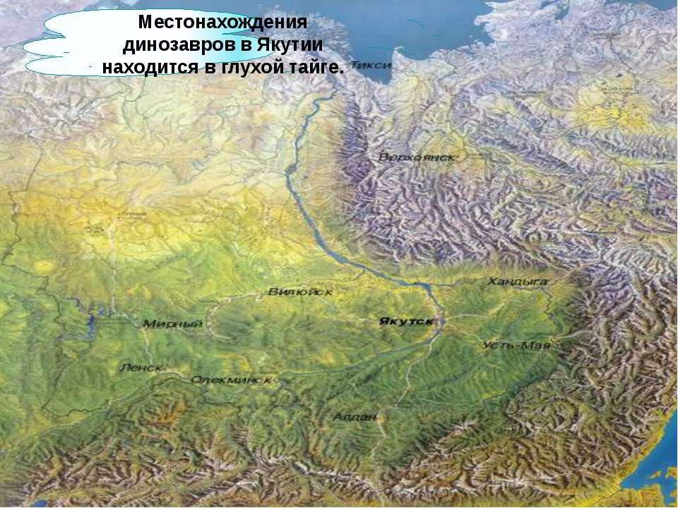 Местонахождения динозавров в Якутии находится в глухой тайге.