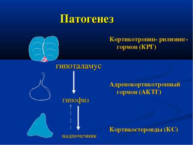 Патогенез Кортикотропин- рилизинг-гормон (КРГ) Адренокортикотропный гормон (А...