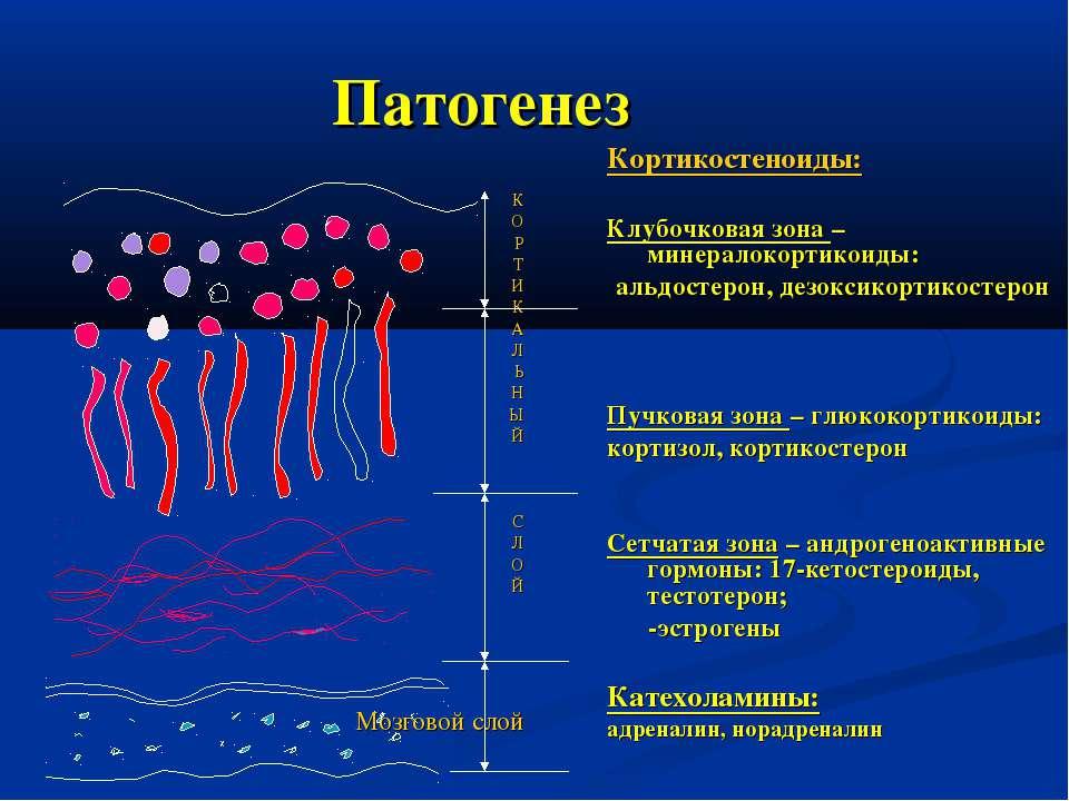 Патогенез Кортикостеноиды: Клубочковая зона – минералокортикоиды: альдостерон...