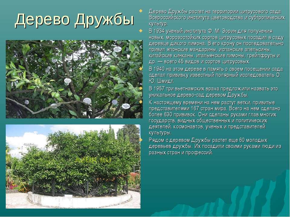 Дерево Дружбы Дерево Дружбы растет на территории цитрусового сада Всероссийск...