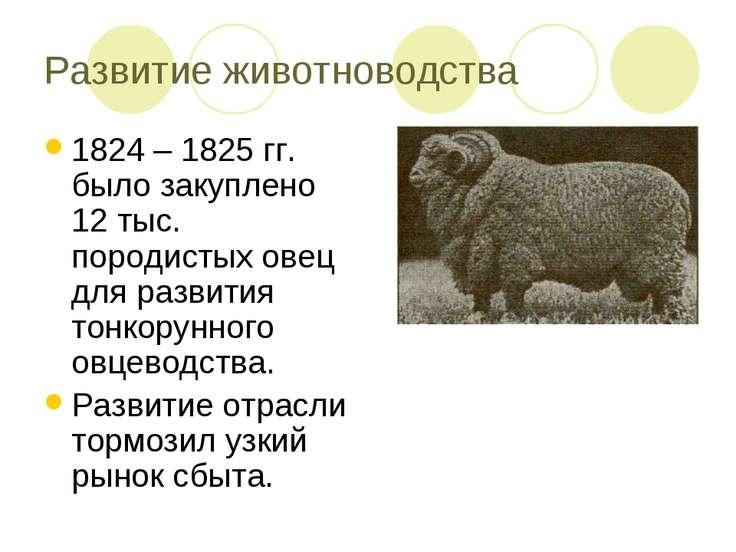 Развитие животноводства 1824 – 1825 гг. было закуплено 12 тыс. породистых ове...