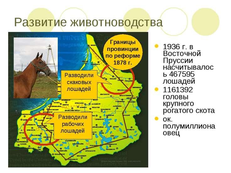Развитие животноводства 1936 г. в Восточной Пруссии насчитывалось 467595 лоша...